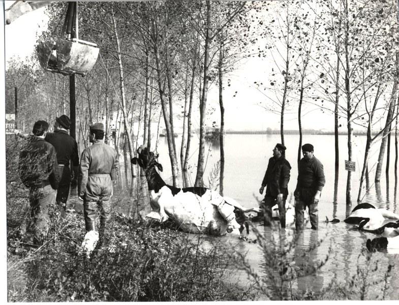 Alluvione del Reno novembre dicembre 19666/19
