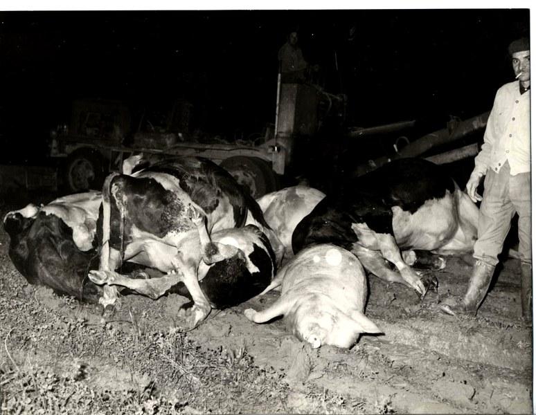 Alluvione del Reno novembre dicembre 1966 3/19