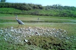 La riqualificazione fluviale in Romagna - foto uccelli