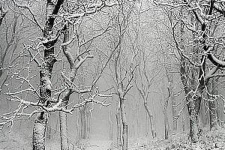 Immagine neve per allerte II.jpg