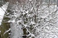 Immagine neve per allerte.jpg